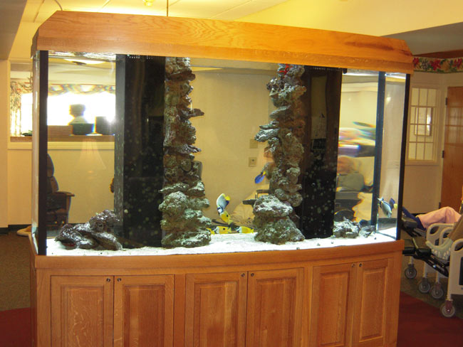 gallery20  Gallon Aquarium Home Design on 50 gallon aquarium designs, 125 gallon marineland, home aquarium designs, 36 gallon aquarium designs, 75 gallon aquarium designs, 55 gallon aquarium designs,