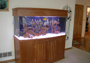 Saltwater Aquarium Cleaning Provides great sea life environment